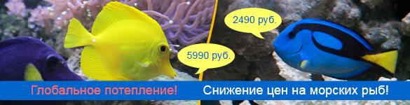 Большое снижение цены на морских рыб!