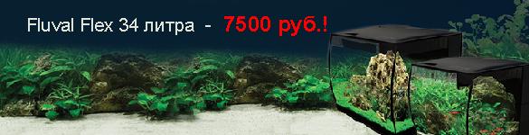 Новинка по выгодной цене: аквариумы Fluval Flex!