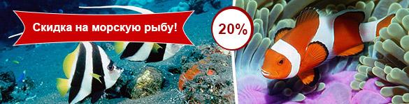 В июне - вся морская рыба со скидкой 20%!