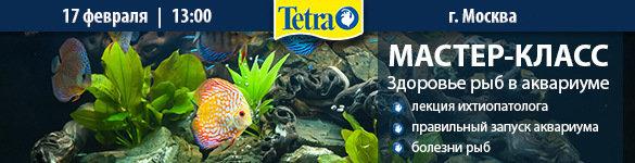 Мастер-класс Tetra Здоровье рыб в аквариуме