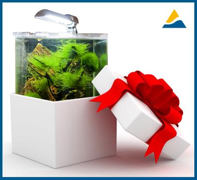 Aquarium_luchshiy_podarok400.jpg