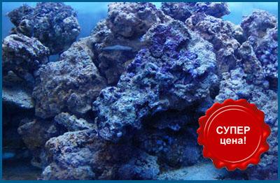 Суперцены на живые камни для морского аквариума в супермаркетах Аква Лого!