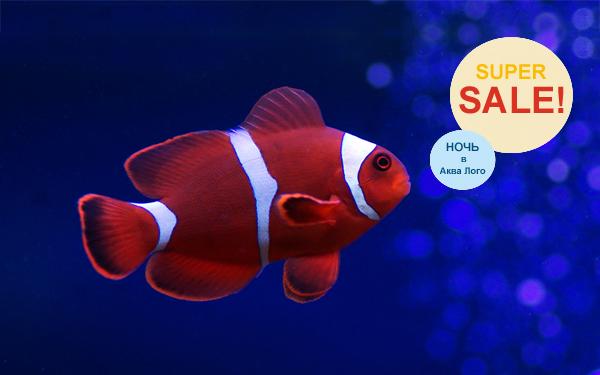 Ночная супер-распродажа аквариумов в супермаркете Аква Лого на Юго-западной