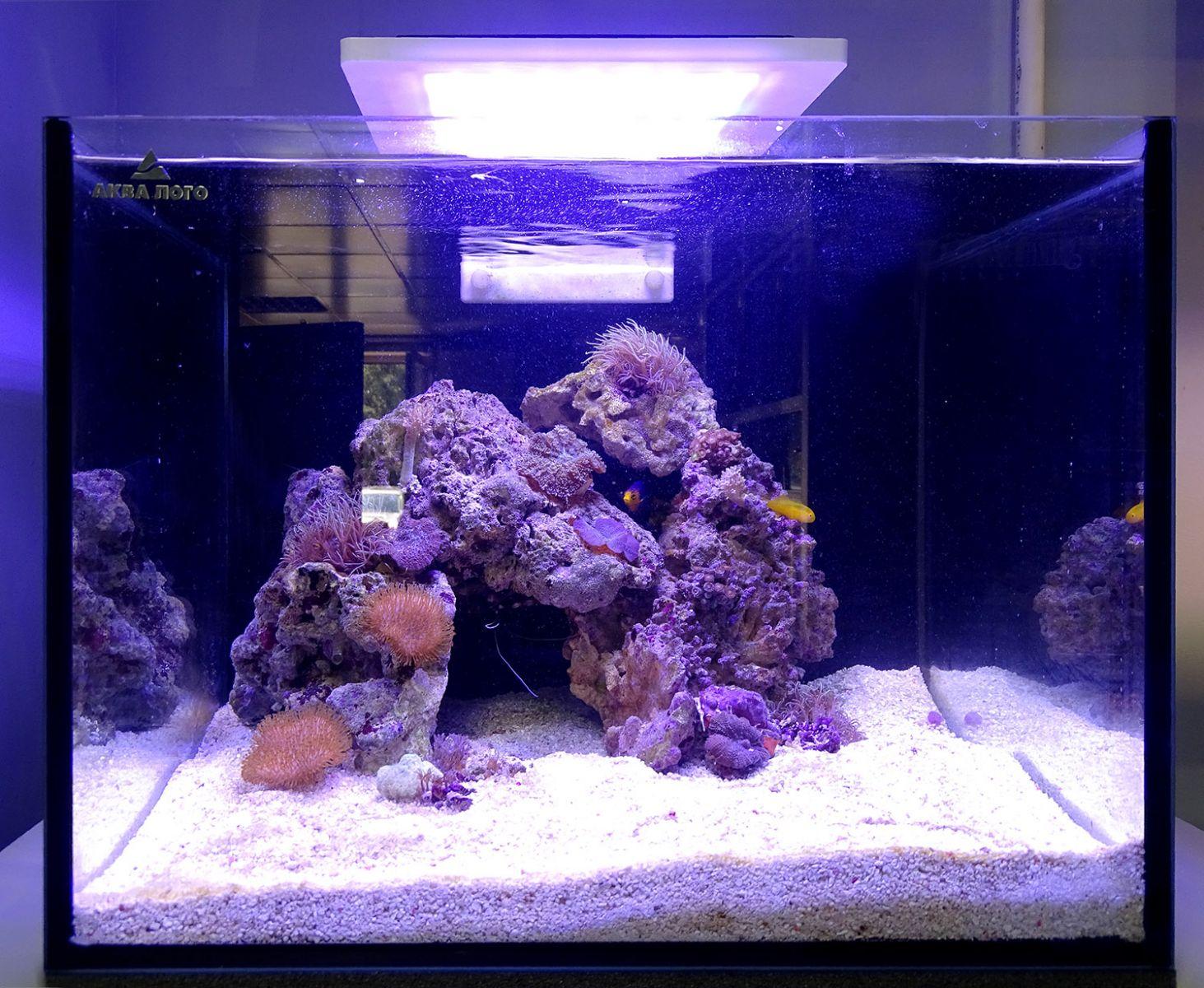 Морской аквариум Ксения - готовое решение в супермаркете Аква Лого!