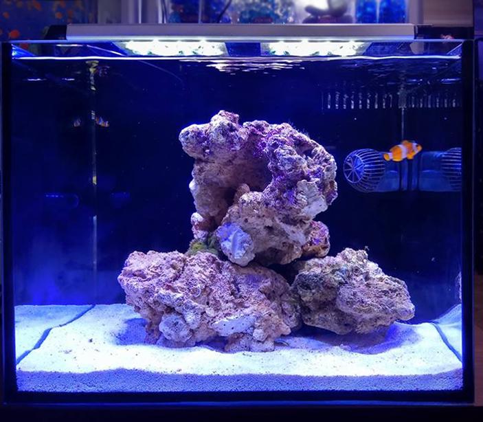 Морской аквариум - готовое решение Ксения - нано-риф в Аква Лого на Волжской