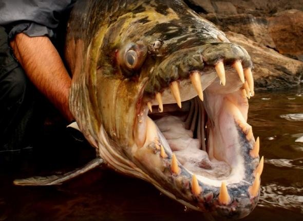 дискавери все про рыбалку видео