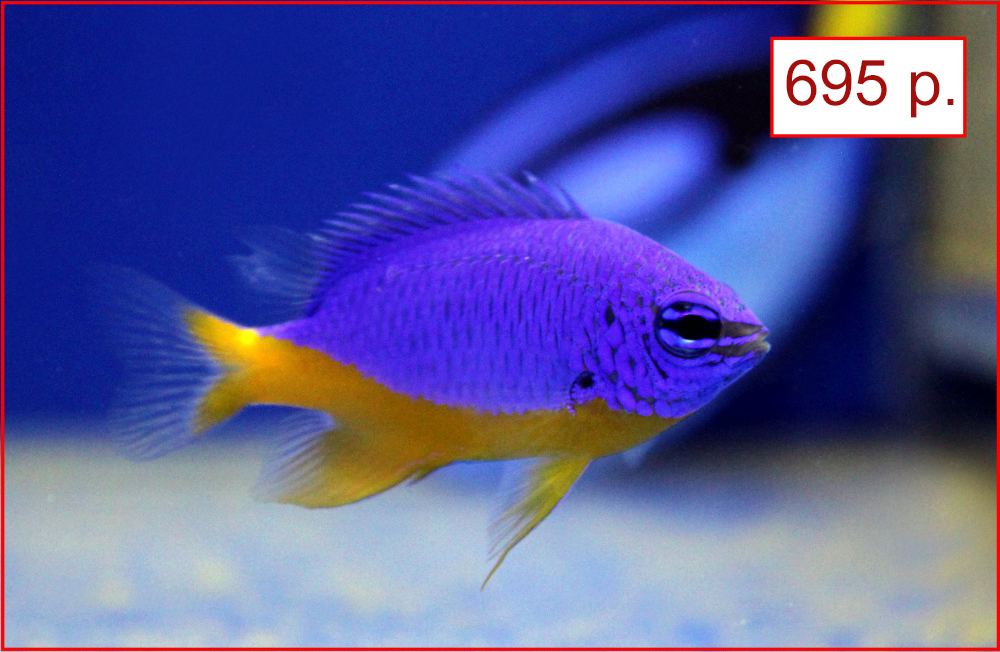 Низкие цены на морских рыб в супермаркетах Аква Лого!