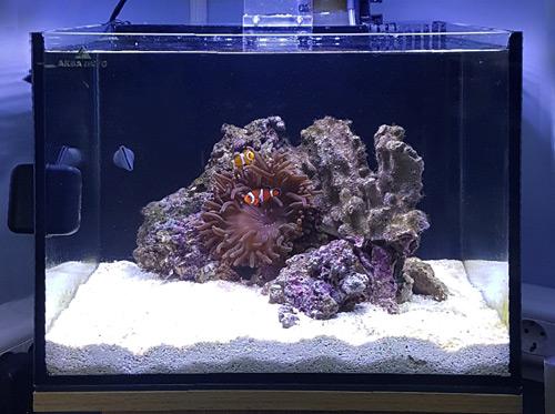 Морской аквариум для начинающих. Современный взгляд.