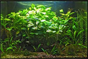 Растения для