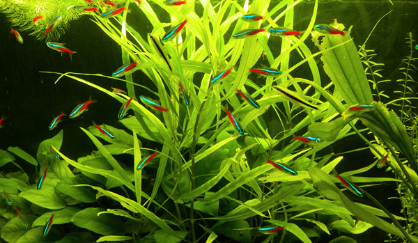 Длинностебельные растения: оформляем задний план
