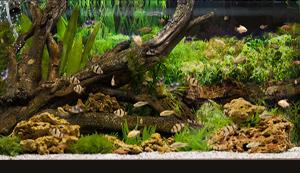 Общие вопросы по первому пресноводному аквариуму (FAQ)