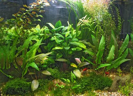 Аквариумные растения без проблем