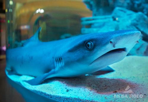 s_reef_shark4.jpg