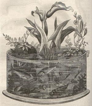 Полтора века русской аквариумистики: как это было. Часть 2. Аквариумистика с конца 1880-х годов до революции.