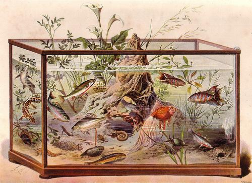 Полтора века русской аквариумистики: как это было. Часть 3. Аквариумистика в период с 1917 по 1987 годы.