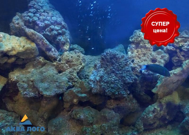 Живые камни для морского аквариума по 995 руб/кг в супермаркетах Аква Лого!