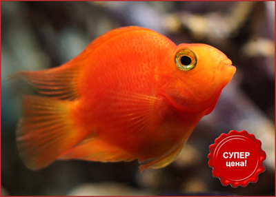 Красная рыба по красной цене в супермаркетах Аква Лого!