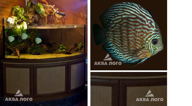 Аква лого на ленинском, бесплатные ...: pictures11.ru/akva-logo-na-leninskom.html