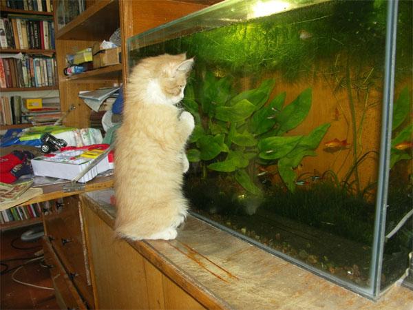 ловить рыбку во  аквариуме