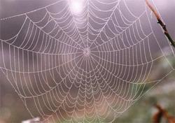 Сеть настоящего паука разрывов не боится