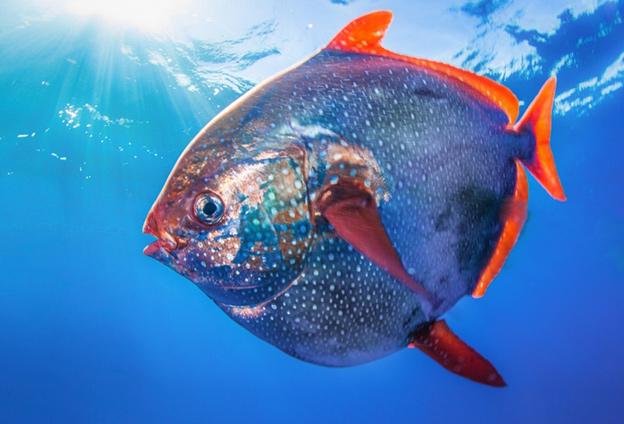 Теплокровные рыбы