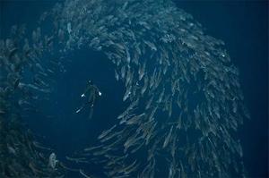 Невероятная серия фотографий подводного мира