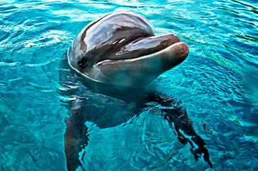 Как морские коньки вынашивают потомство, топ 3