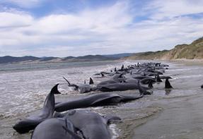 Дельфины в Новой Зеландии