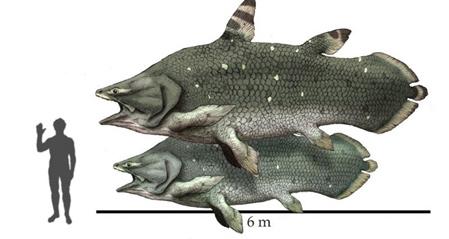 Мавзония, древняя лопастеперая рыба