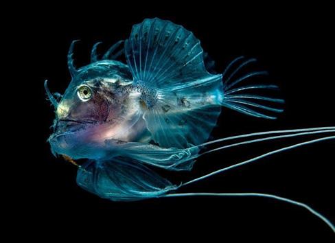Почему рыбы светятся?
