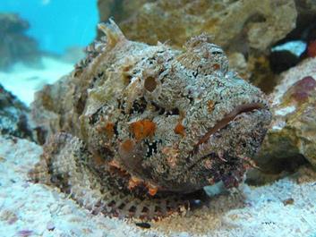 ТОП-3 самых опасных рыб Красного Моря