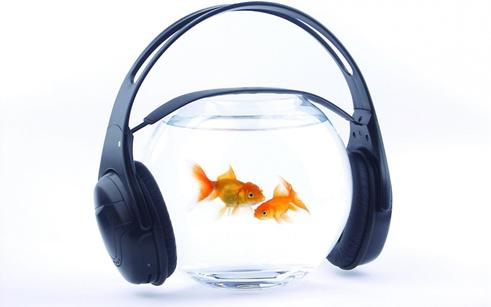 Слышат ли рыбки музыку?