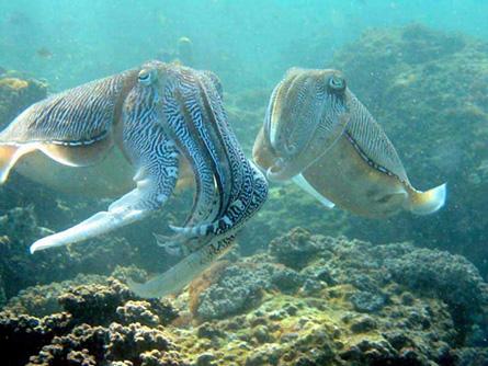 Почему очень много морских обитателей любят плавать возле берега?