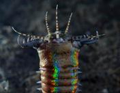 Гигантский червь виноват в исчезновении рыбок?