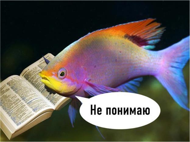 Самые умные рыбки