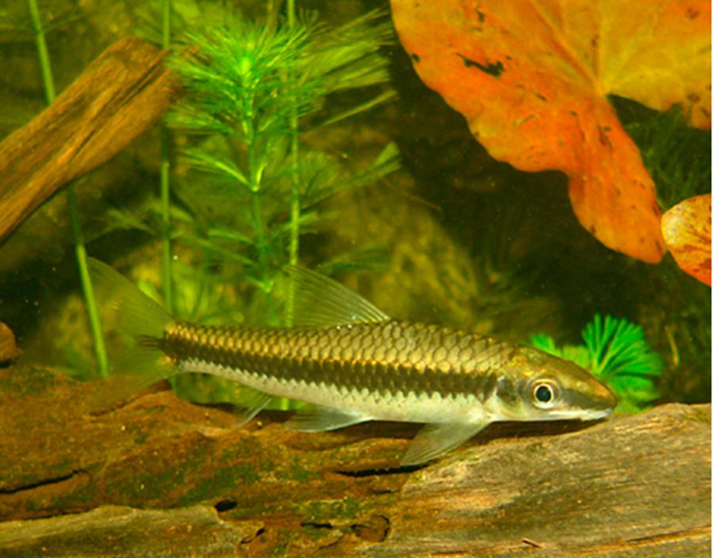 Топ 10 полезных обитателей аквариума
