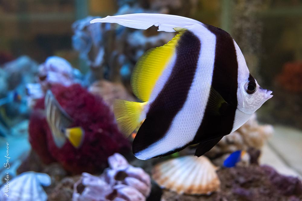 Топ-15 неприхотливых морских рыб
