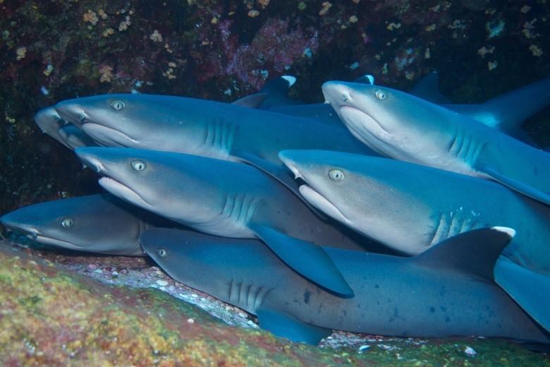 Как спят акулы?