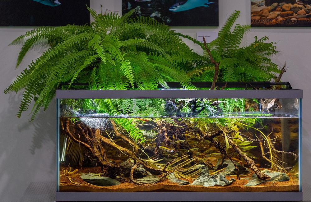 По итогам голосования аквариум Егеревых занял 1-е место на конкурсе биотопных аквариумов