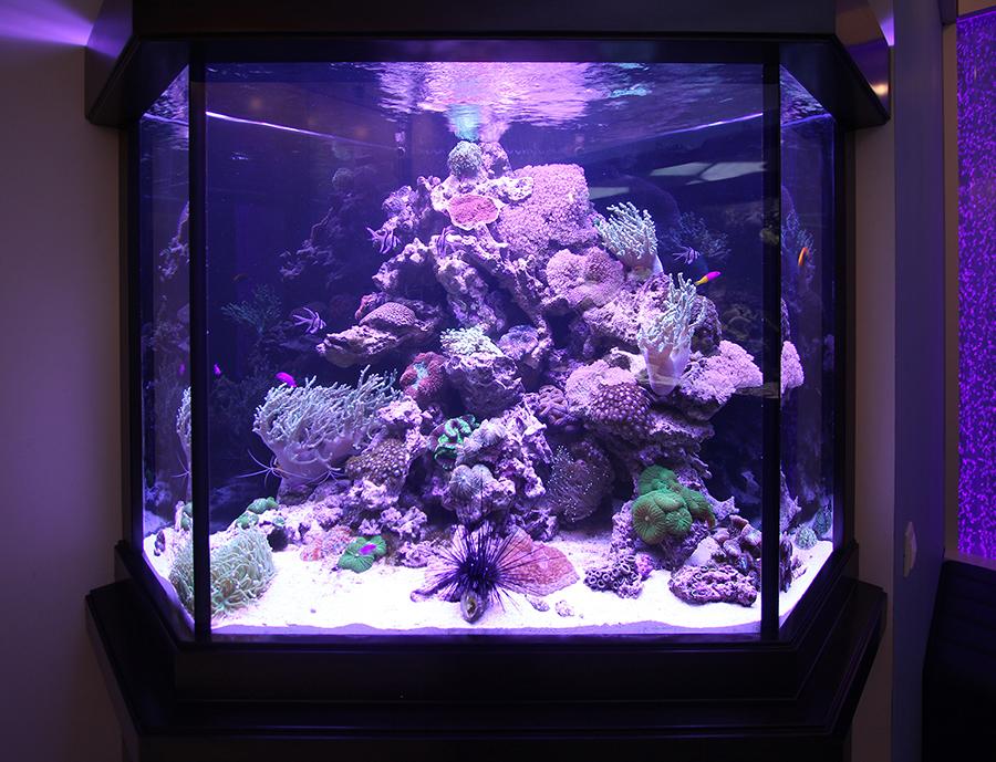 Содержание морских гидробионтов в аквариуме