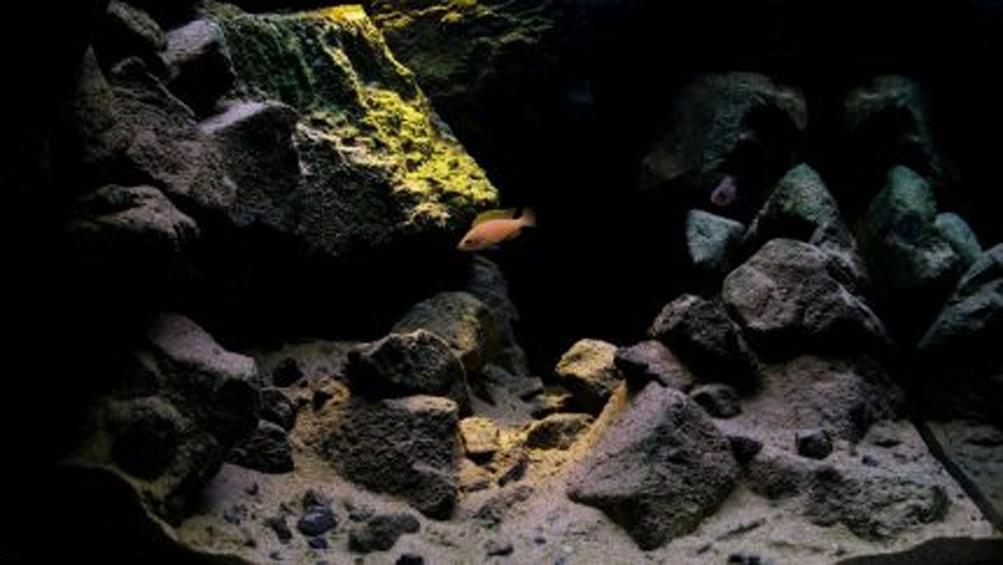 Топ 5 биотопных аквариумов