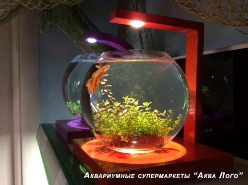 Аквариум-ночник с петушком малый в супермаркете Аква Лого на Соколе
